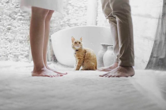 Couple and cat (Photo by Hutomo Abrianto on Unsplash)