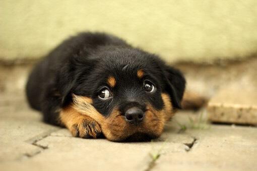 伏せている犬の写真