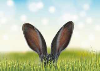 草むらから抜き出たうさぎの耳