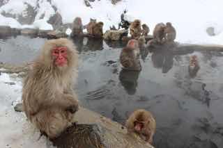 雪の中、お猿さんでいっぱいの温泉