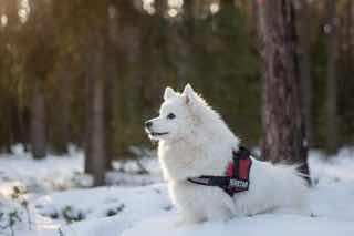 雪山に佇む白い犬