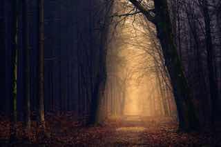 暗い森のさきに明るい出口がみえる