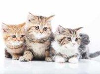 みんな一緒の方向を見てる子猫たち