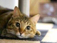 ねころんでこっちを見る猫