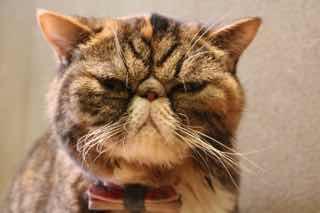 渋い顔のネコ