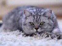 リビングにくつろぐ猫