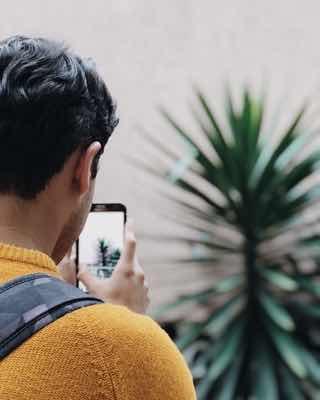 スマホで観葉植物を撮影する男性