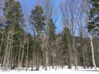 雪のつもった冬の林