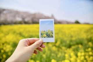 菜の花畑とポラロイド写真
