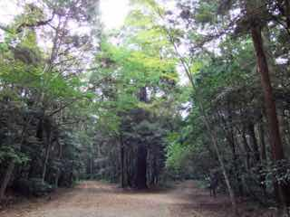 森の分かれ道