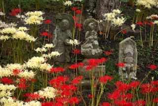 石仏群に咲く彼岸花