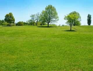 ひろい草原と樹木