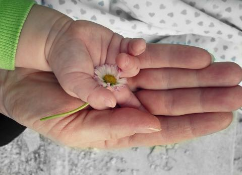 大人と子供の手のひらに野花