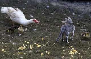 鳥同士の喧嘩