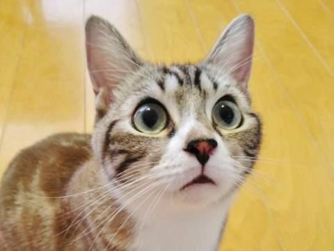 目を開かせる猫