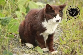ムシャクシャしてる猫