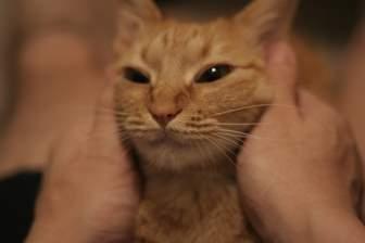 猫の顔をムニュー