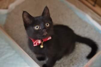 首輪をした黒猫の子