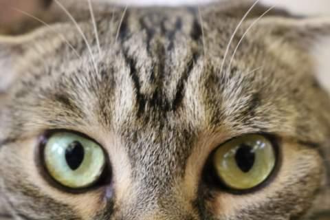 猫があなたを見るドアップ