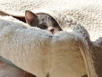 毛布とベッドにかこまれる猫