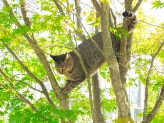 木登りするねこ