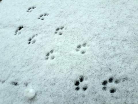 雪に残った猫のあしあと