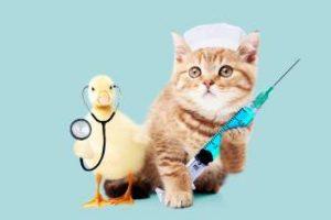 猫とアヒルのお医者さん