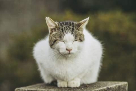 眼をつぶってうずくまる猫