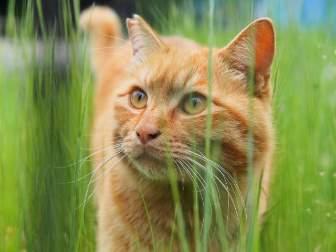 耳を立てる野良猫
