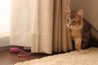 かくれんぼの猫