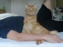 ベッドの上の飼い主と猫