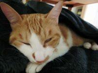 猫が白目剥いて寝ている