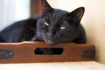 黒猫が白目むいてねておる