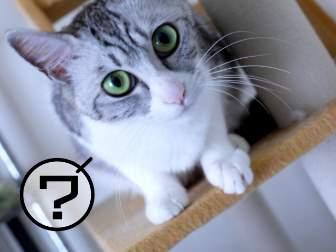 はてなマークのついた猫