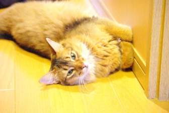 廊下で横たわるソマリ