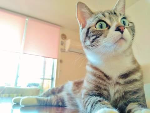 床でくつろぐトラ猫