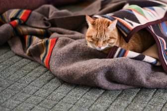 毛布にくるまって寝る猫