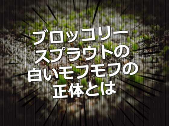コネ(こね) - 日本語俗語辞書